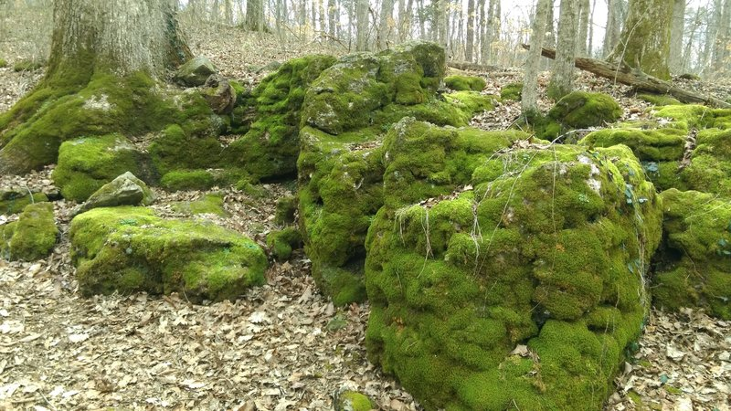 Mossy rocks are a sight to see along this section of the trail.
