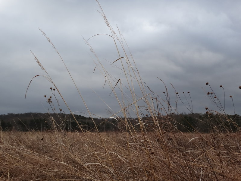Prairie grass flows in the afternoon wind along the Prairie Trail.