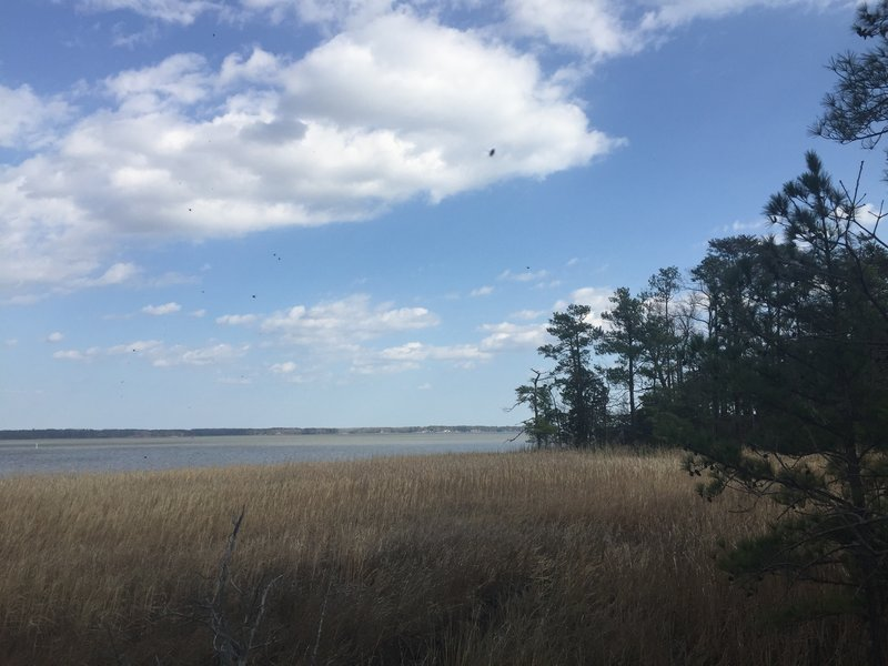Enjoy pleasant views of the York River from the end of the Pamunkey Trail.