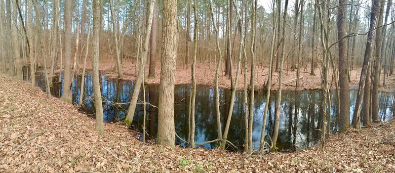 Black swamp waters are your trailside companion along this part of the Eagle Spur Trail.