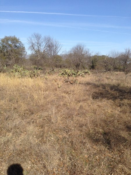 Keep your eyes peeled for larger groupings of prickly pear cacti along the South Overlook Trail at Eagle Mountain Park.