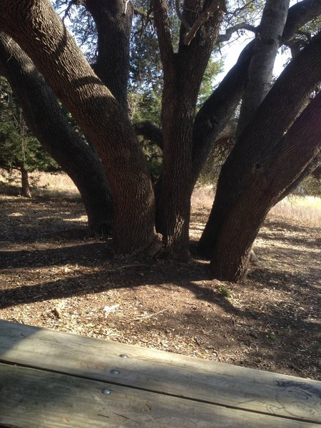 Enjoy this picnic bench and hydra tree at the southern end of the Shoreline Trail at Eagle Mountain Park.