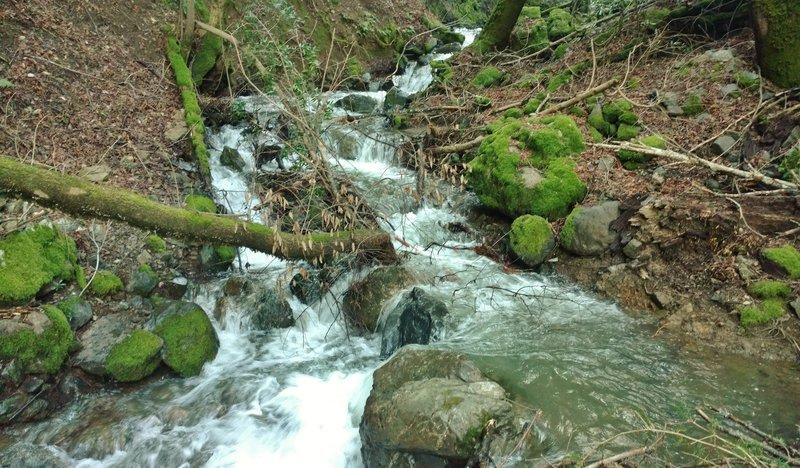 A creek along the Woods Trail cascades vigorously after winter rains.