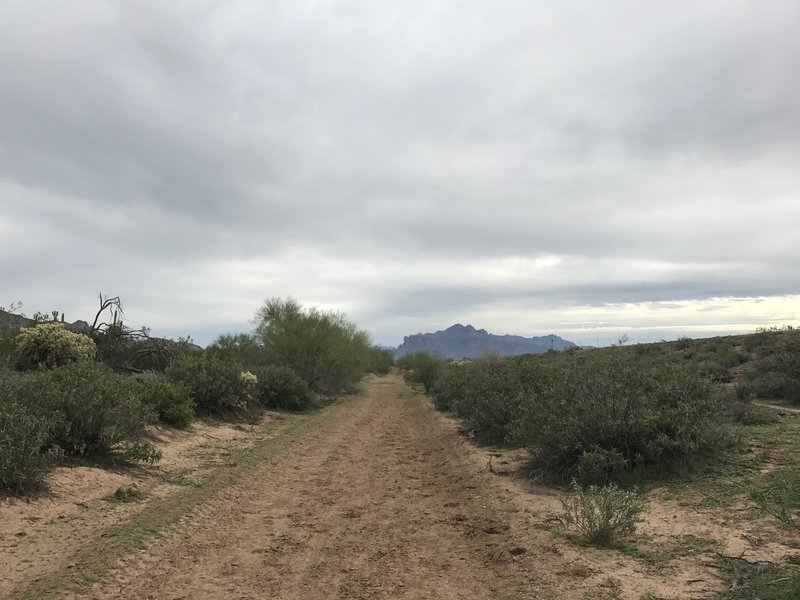The Channel Trail offers a great view of the distant Superstition Mountains.
