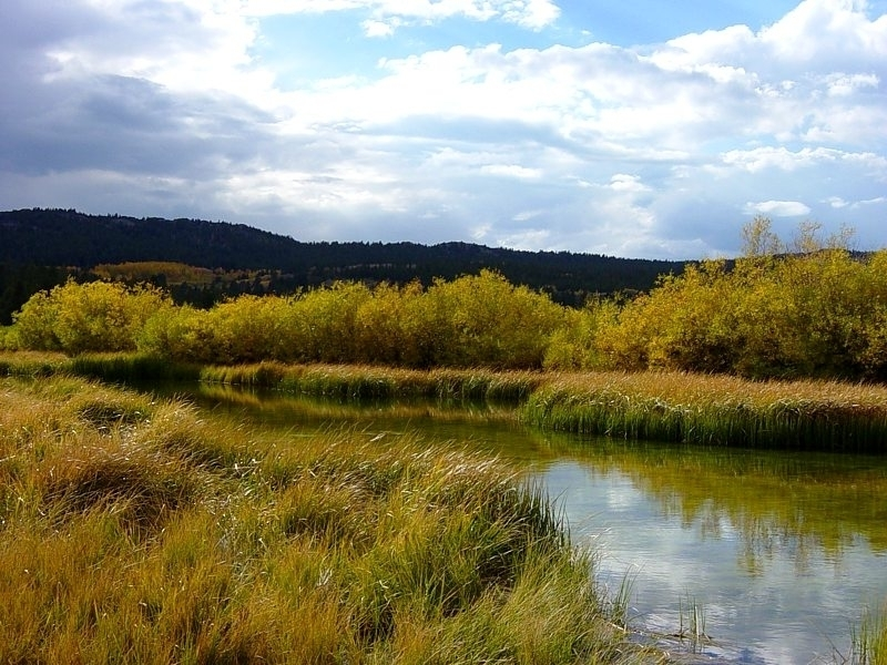 Hunter Lake is a shallow pond nestled within a willow-fringed meadow.