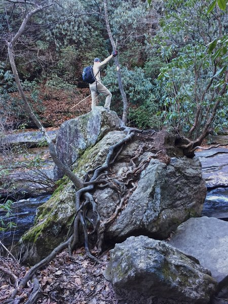 Check out this cool rock-and-tree-root formation right beside Matthew's Creek.