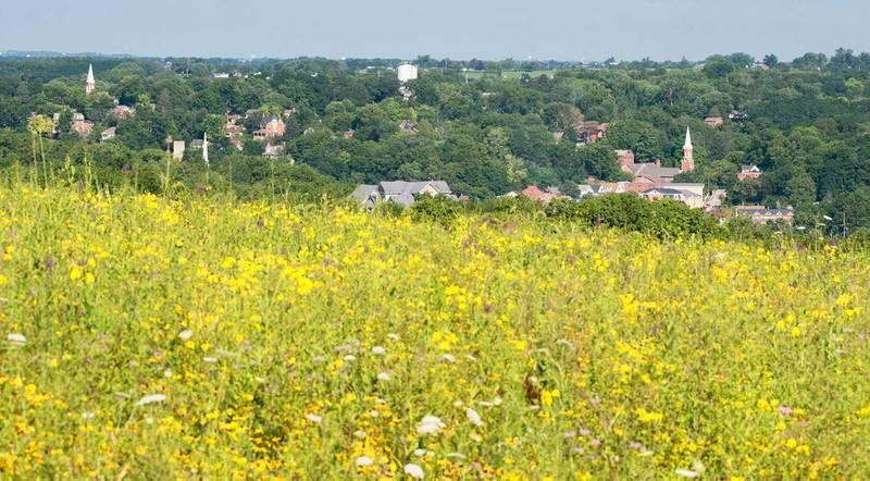 Summer wildflowers blanket Gateway Park outside of Galena.