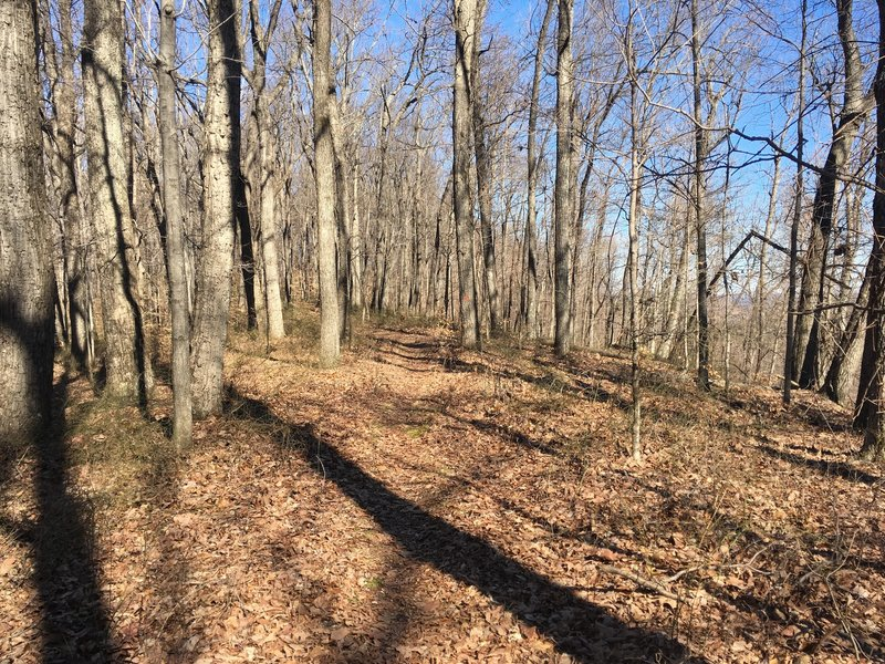 This is what to expect along the ridge-top section of the Loop Trail.