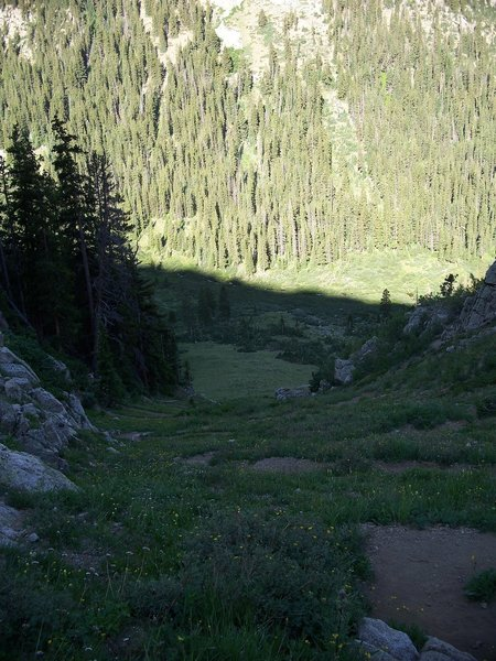 The first set of switchbacks swirl through a carpet of wildflowers.