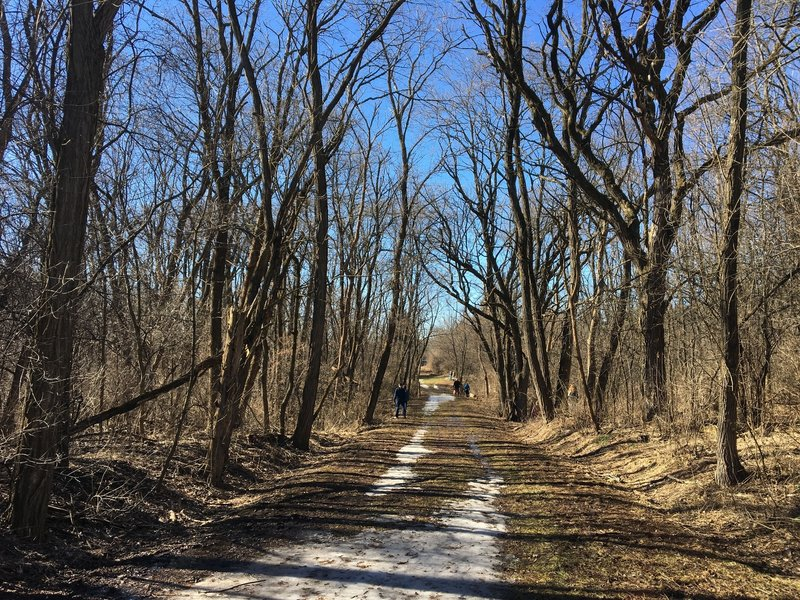 Nearing the end of the trail, enjoy this narrower, tree-lined path.