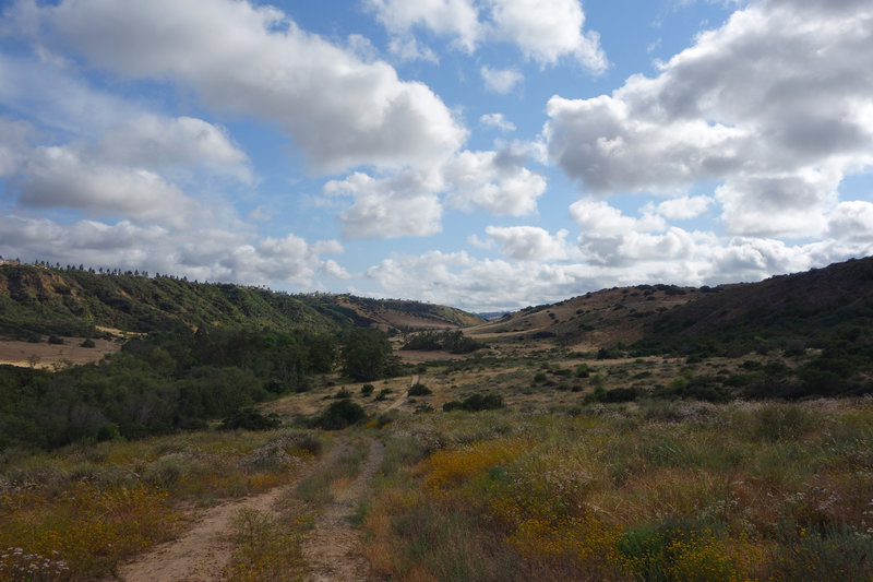 Los Peñasquitos Canyon is still green in the spring after a mostly dry winter.
