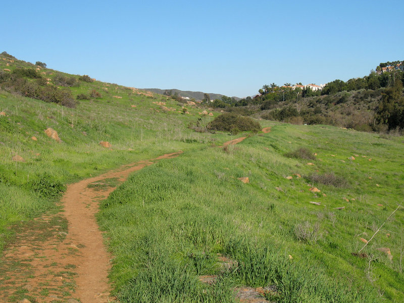 Los Peñasquitos Canyon Trail (east of Black Mountain Road) grows green after good winter rains.