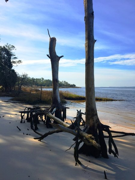 Roots reach for the sand along the water's edge.