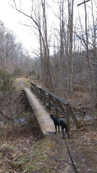 An even-larger footbridge on the Daniel Boone Trail peaks Fido's interest.