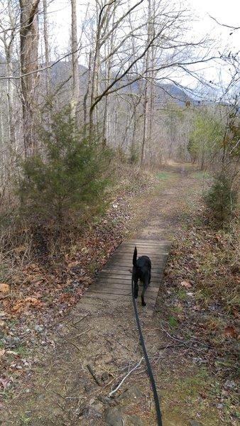 A small footbridge keeps Fido's feet dry on the Daniel Boone Trail.