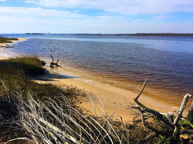 From this viewpoint, you'll encounter a great look at the tannin-rich waters of the Cape Fear River.