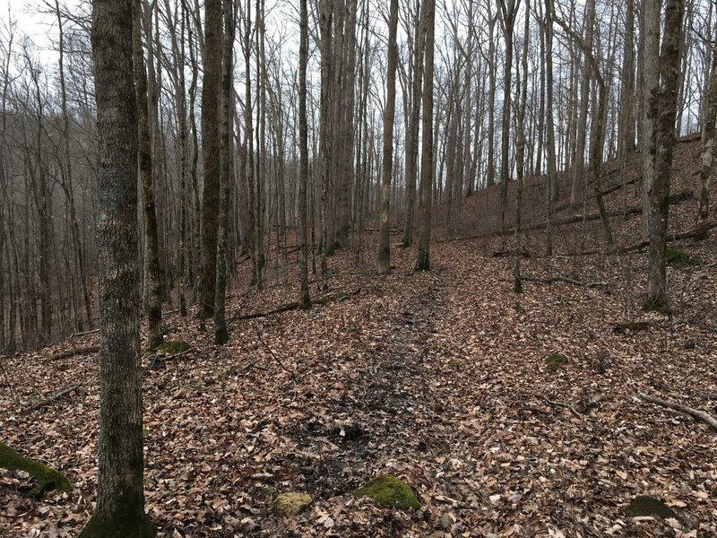 Enjoy this nice smooth section of the Raymer Hollow Trail.