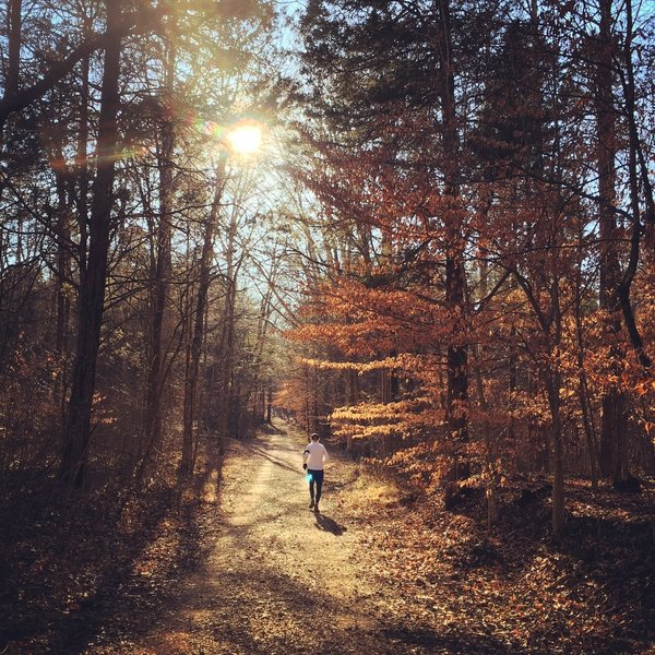 Great light makes for a beautiful run on the Buffalo Creek Trail.