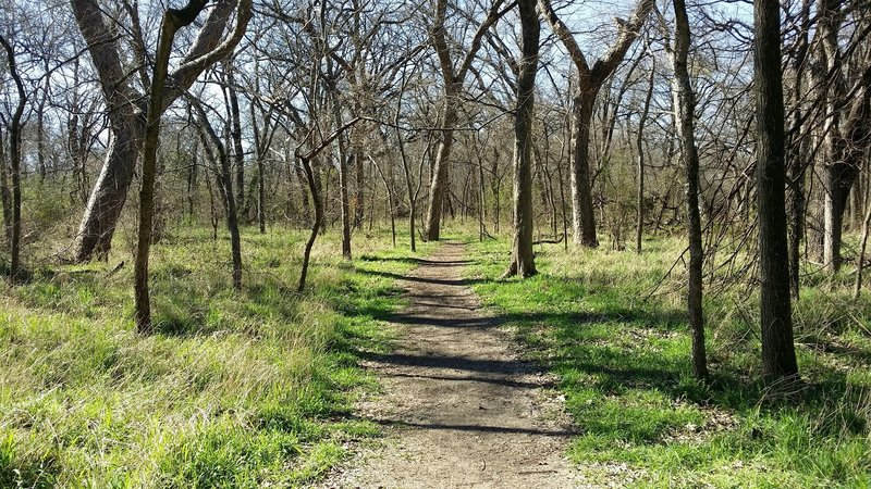 This is a typical trail in the hardwood river-bottoms of the nature preserve.