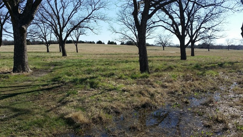 Enjoy this hardwood grove near the entrance to the High Meadow Trail.