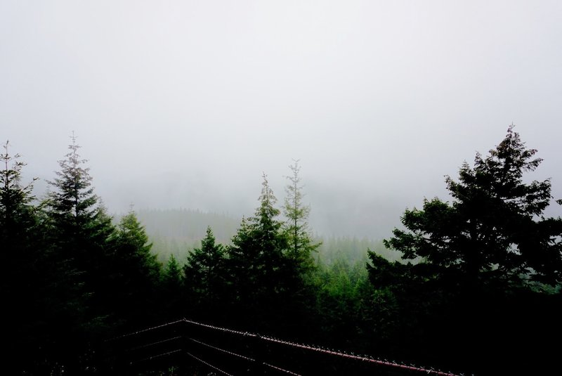 Heavy fog shrouds nearby forests along the Wildcat Trail.
