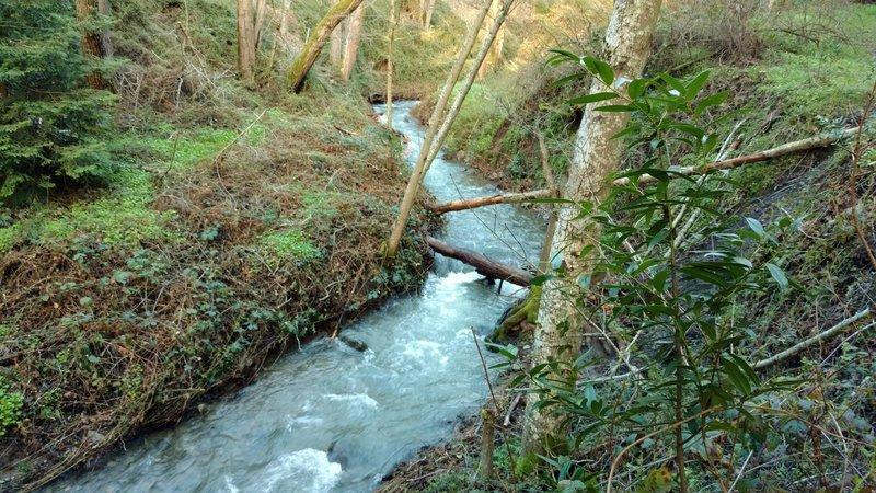 A creek along the Limekiln Trail rushes to Lexington Reservoir after winter rains.