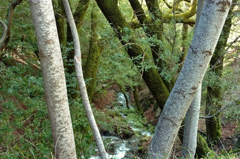 The Limekiln Trail crosses this small creek, which can flood with wintertime rains.