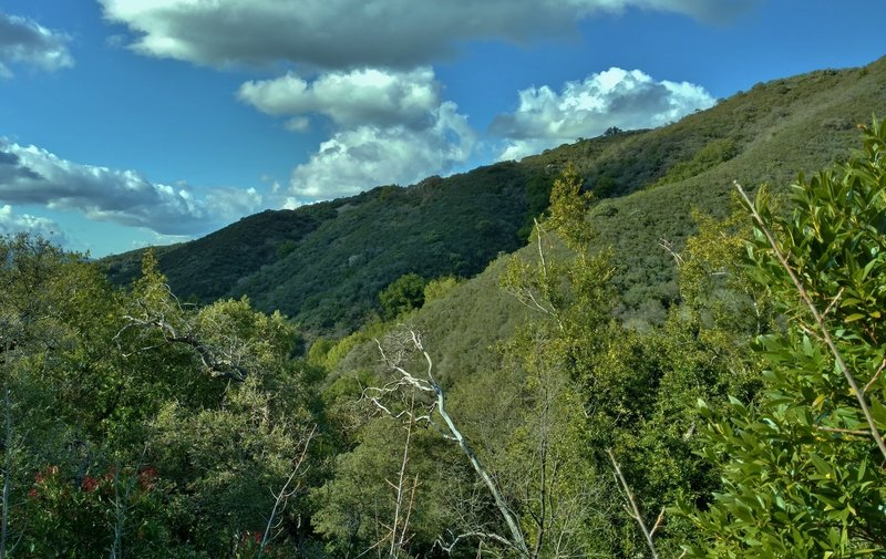 High on the Limekiln Trail, enjoy these views looking across the valley to the source of a creek.