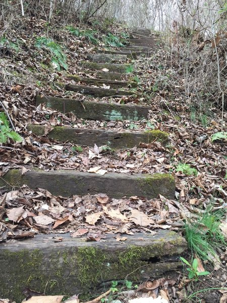 Steps aid your passage over a steep section of the Sinking Waters Trail.