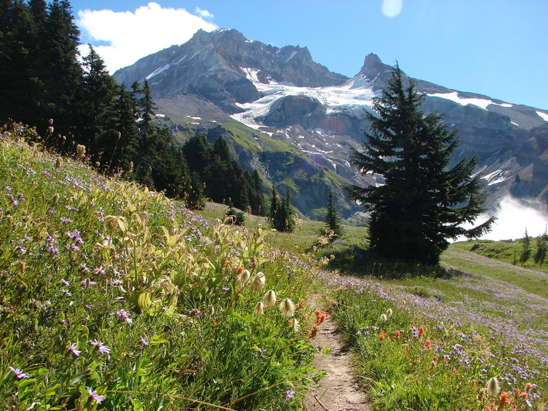 Once you get out of the forested section of the Yokum Ridge Trail, the wildflowers and views are awesome! Indian paintbrush, pasque flower, and aster blanket the meadow as you overlook Reid Glacier. Photo by Yunkette.