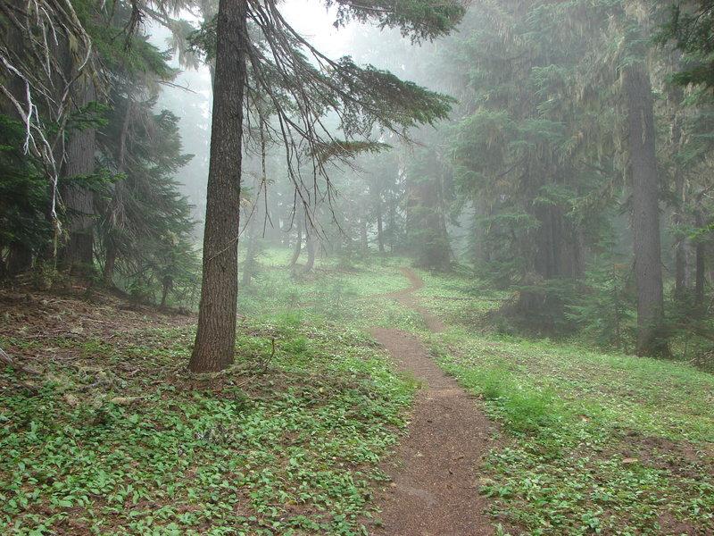 The Yokum Ridge Trail is a gradual-but-steady climb, gaining 2500 feet from Ramona Falls. Photo by Yunkette.