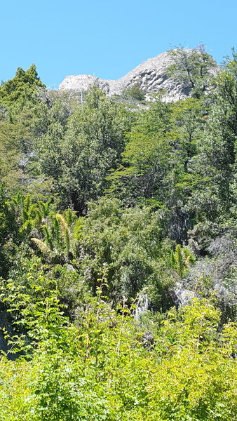 The route to the Col is through dense undergrowth.