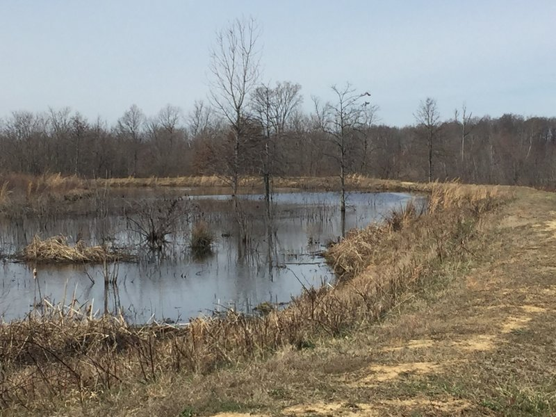 Walking the dams along Massey Trail, enjoy this nice view of the water.