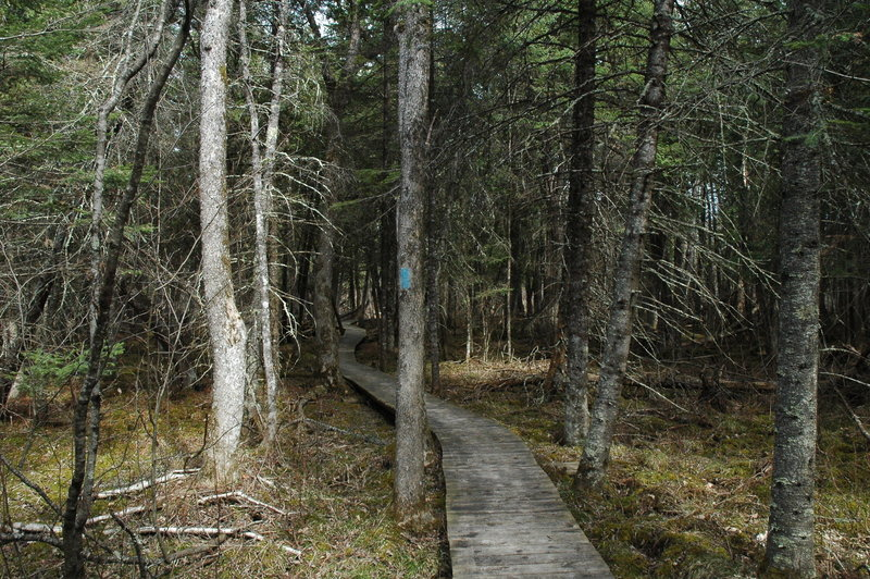 Brule Bog Boardwalk offers dry passage through this portion of the North Country Trail.