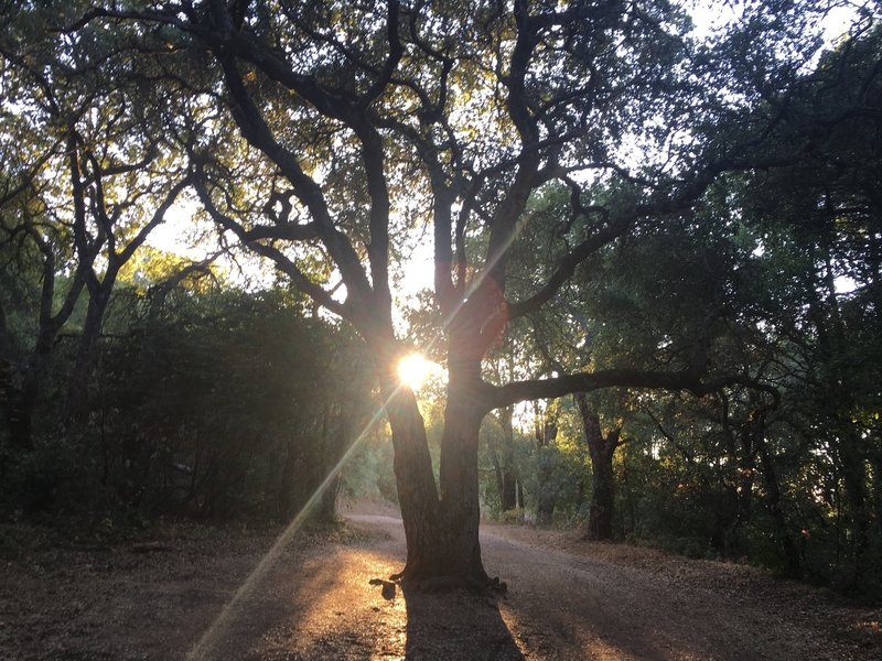 This tree marks a popular turnaround point about 2.4 miles into the Kennedy Trail from the northern parking area.