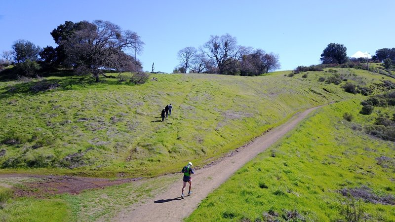 Almaden Quicksilver County Park is lush with green grass near the Randol and Mine Hill intersection.