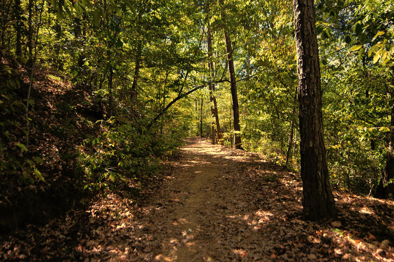 Iron Works Loop is a gorgeous trail through dense hardwood forests.