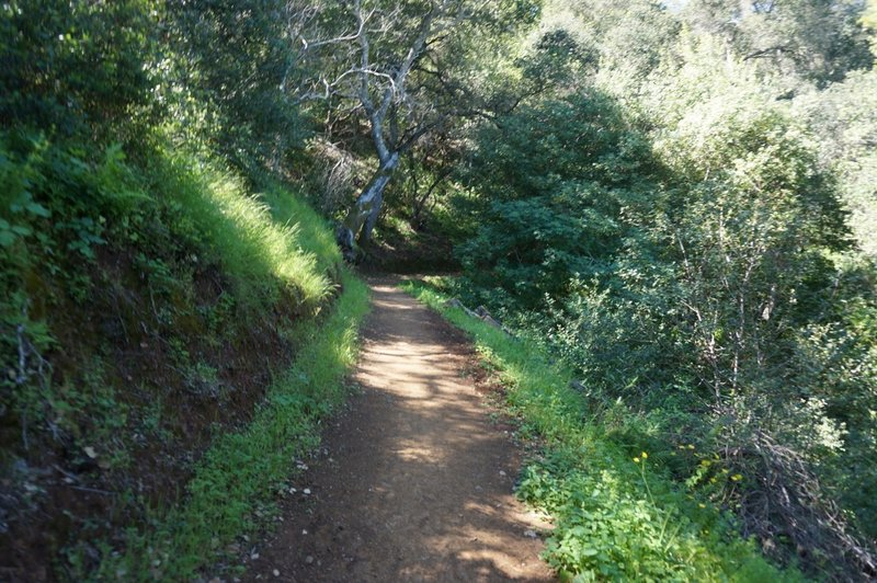 Much of the area's singletrack is well maintained.