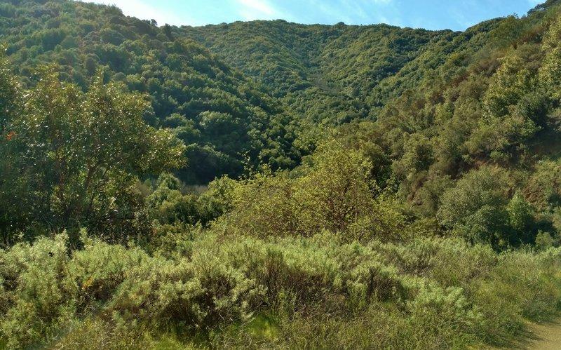Heading into the Santa Cruz Mountains on the Kennedy Trail, take time to enjoy your lush green surroundings.