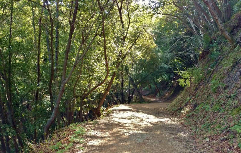 Kennedy Trail runs through the woods at low elevations.