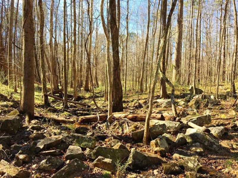 A rocky tributary serves as your trailside companion along OWASA Corridor.