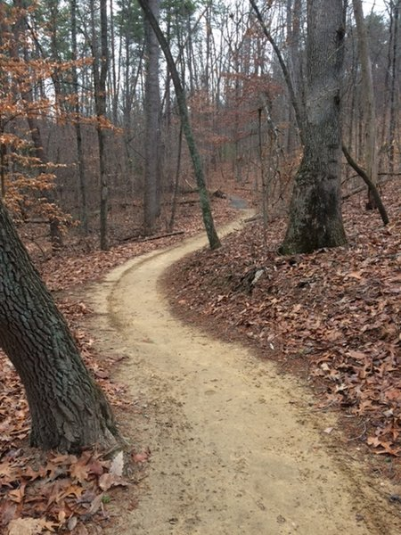 The Prison Camp Trail winds through the forest on beautiful, buff singletrack.