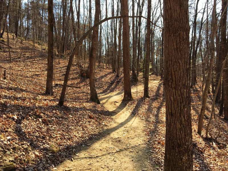 The Prison Camp Trail winds through a winter forest.