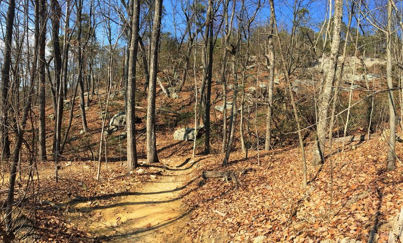High on Rocky Face, experience beautiful hardwoods and dramatic views of the exposed bedrock.