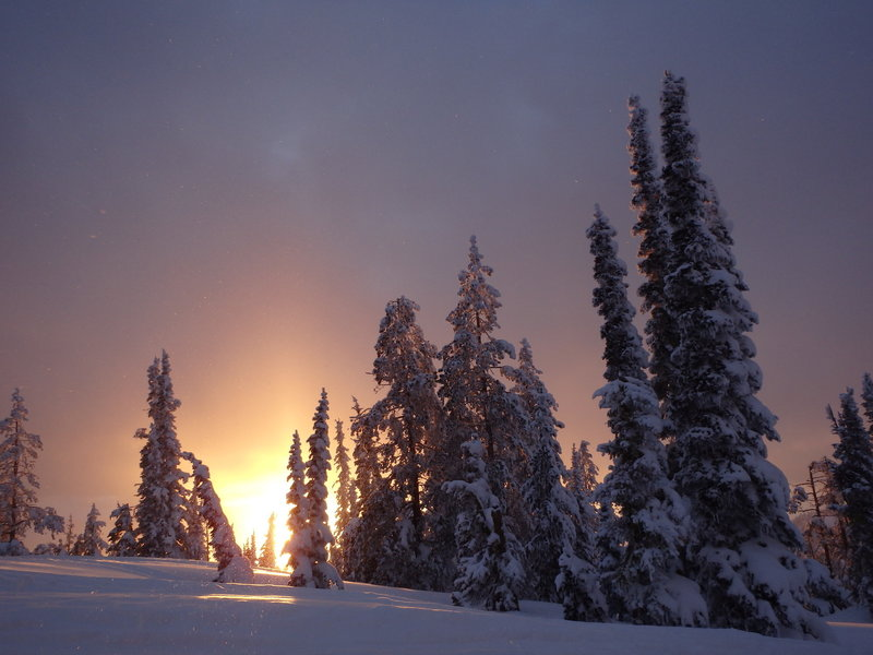 The sun sets over a grove of frosted evergreens on the road to the summit of Pilot Peak.
