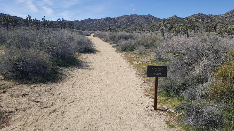 Look for this sign marking the trail heading up the wash. Most of the trail is sand (as seen here).