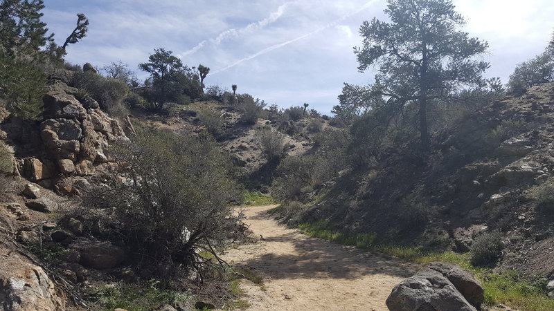 It's a neat area heading up the trail to Warren Peak, complete with lots of vegetation and rock formations.