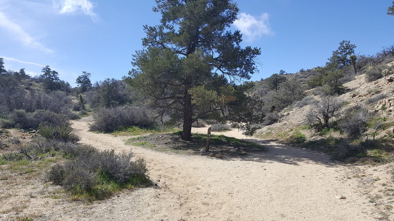 At the second split with Panorama Loop, follow the WP arrow to the right to continue on to Warren Peak.