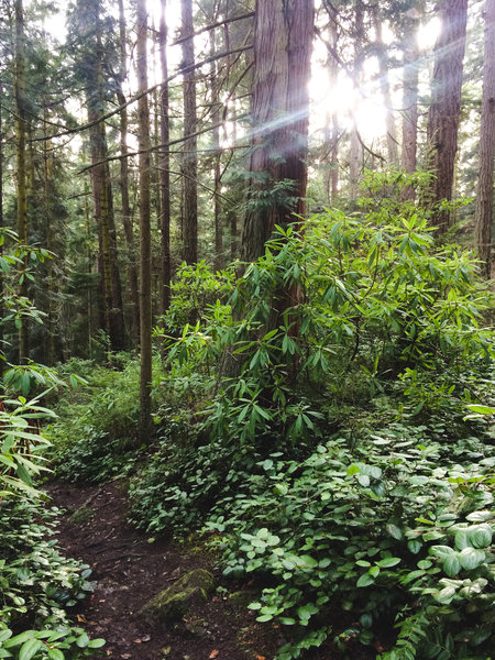 The Goose Rock Summit Trail takes you from the seashore to the mountaintop via a monstrous forest.