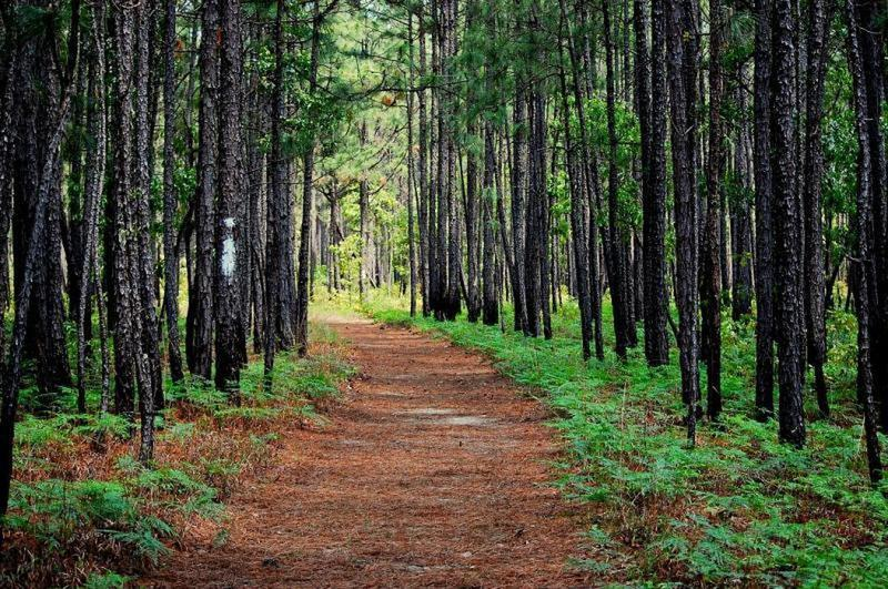 The Palmetto Trail travels through gorgeous green forests.